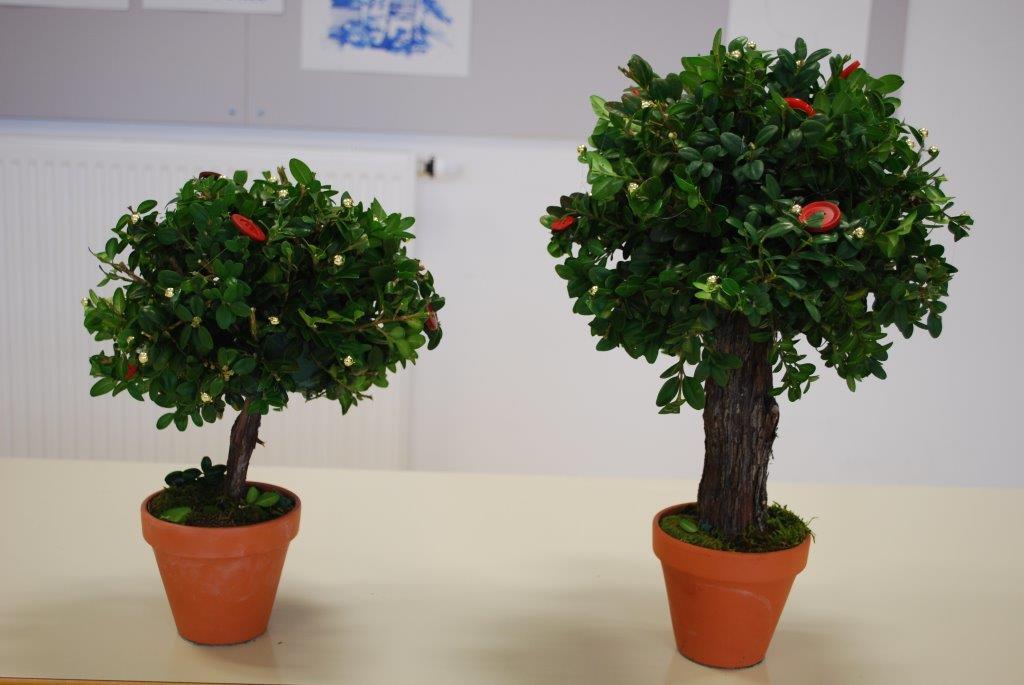 drevesa5