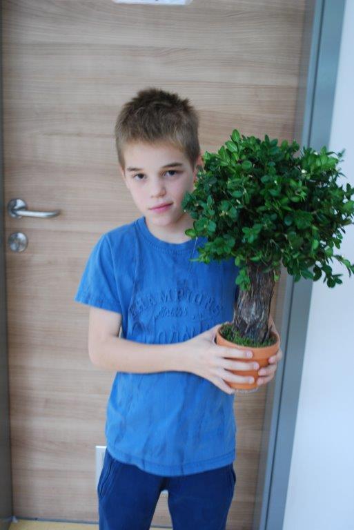 drevesa7